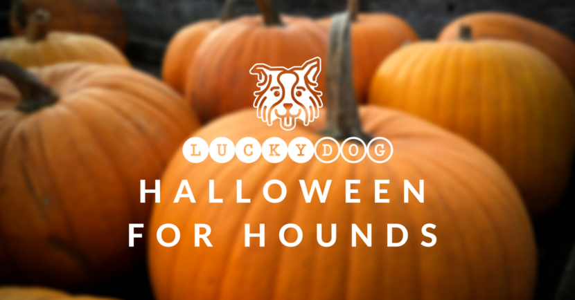 Halloween for Hounds